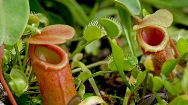 Выращивание хищных растений