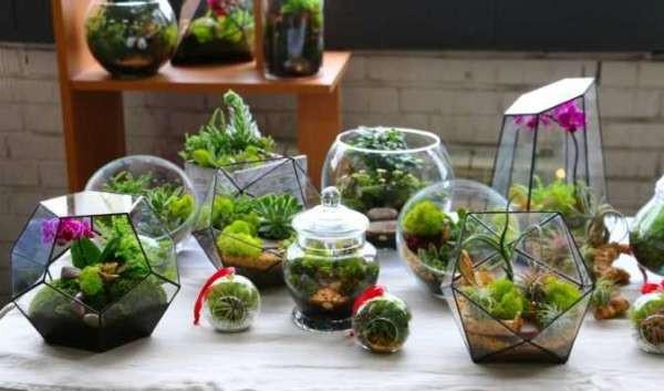 выращивания сада в бутылке