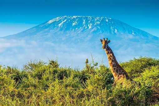 Гора Килиманджаро, Танзания.
